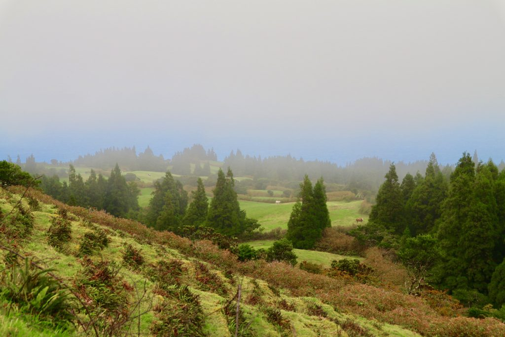 Levada Hike in Faial (Azores)