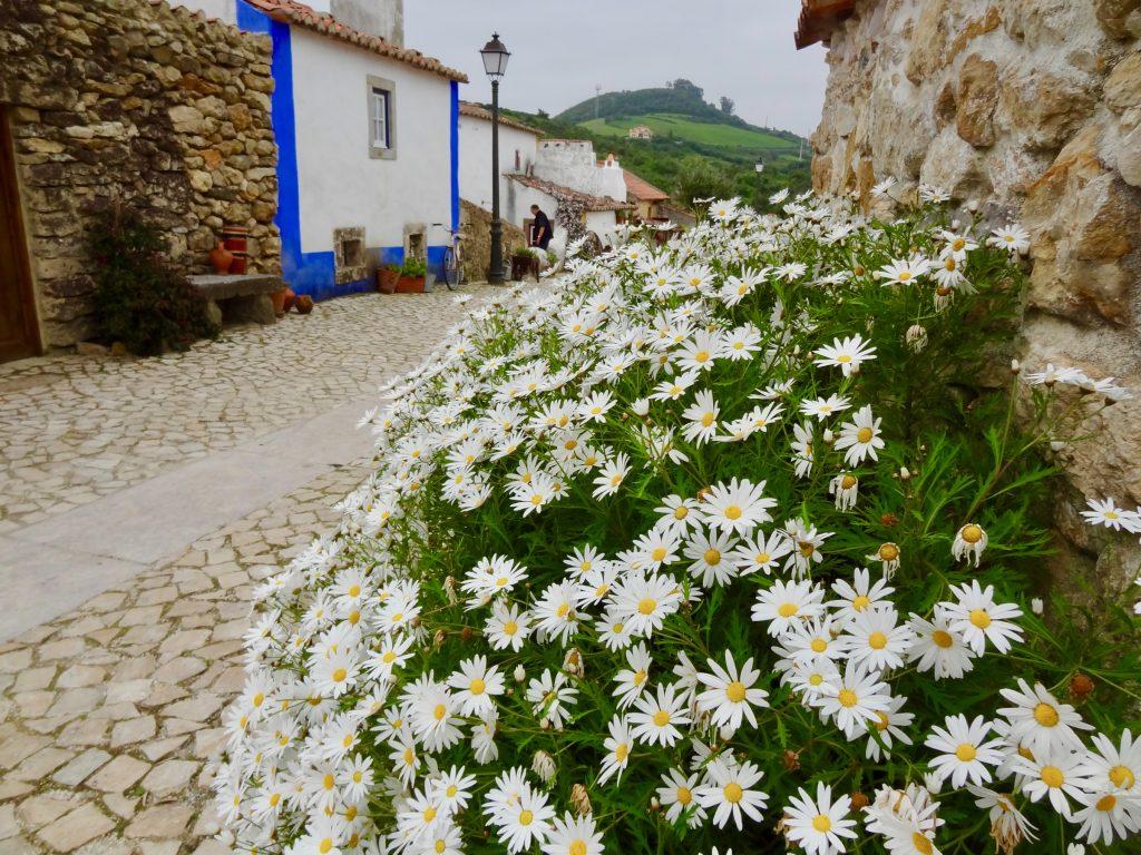 Aldeia Mata Pequena Flowers on the village street