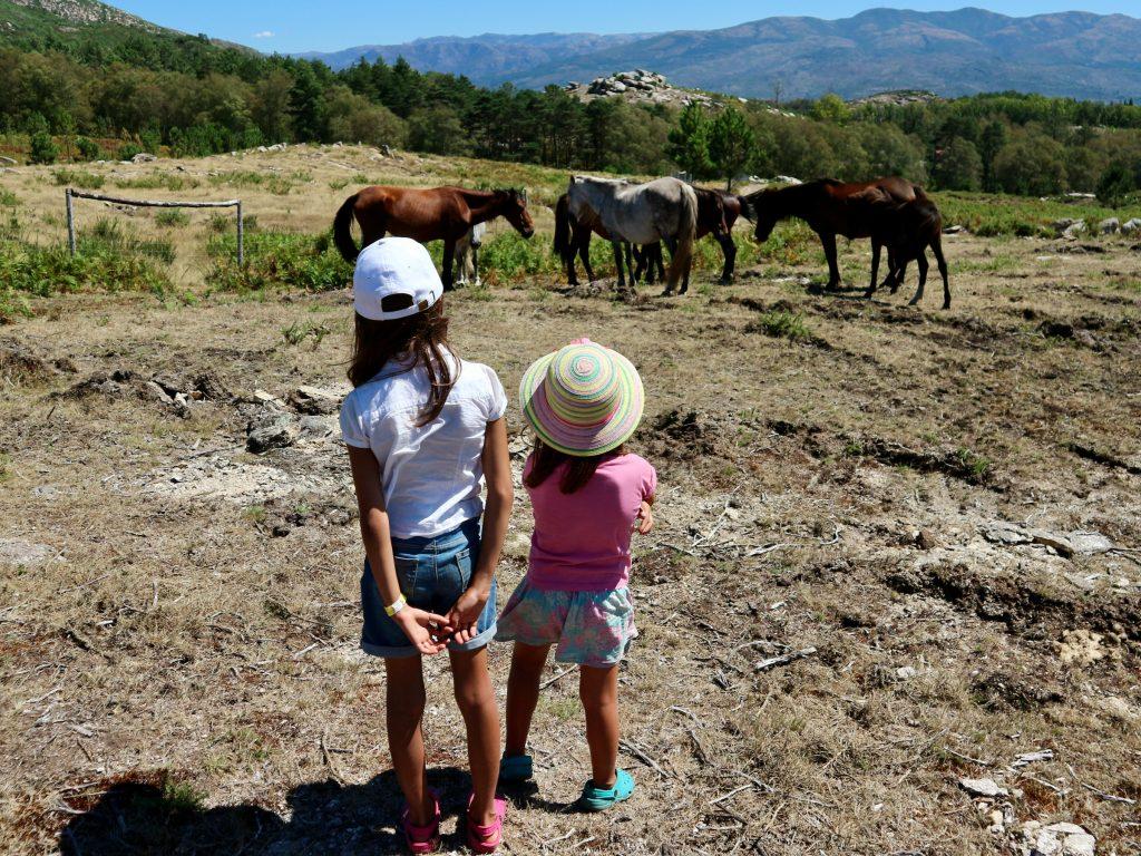 Garrano ponies at the Porta do Mezio